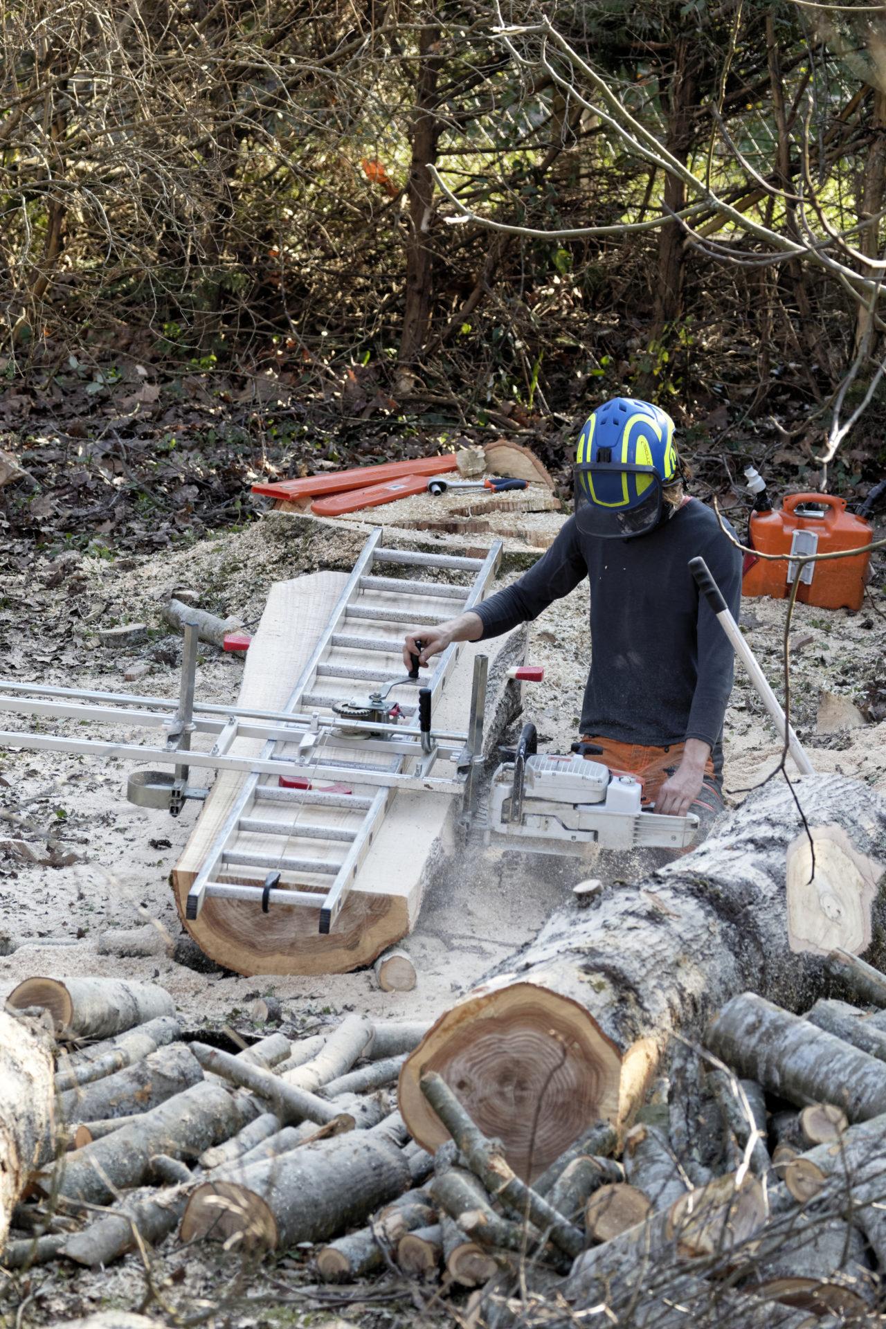 Doctor tree, Planchage du bois sur site
