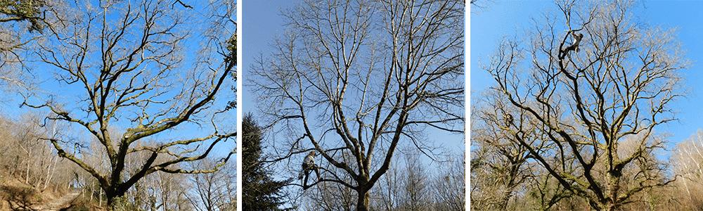Doctor tree, arboriste grimpeur